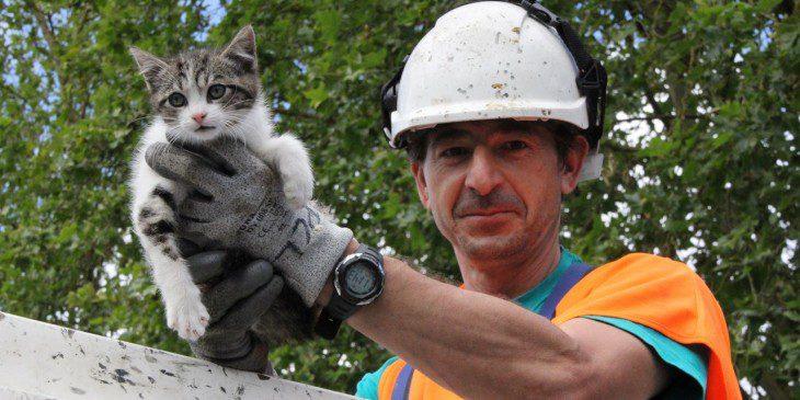 Resultado de imagen para rescate de gatito  del arbol
